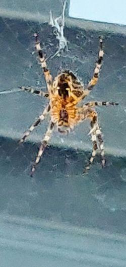 spider Photowalktheworld Spider Arachnid Spider Photography Nature Oneplus6 Mobilephotography Water Endurance Close-up