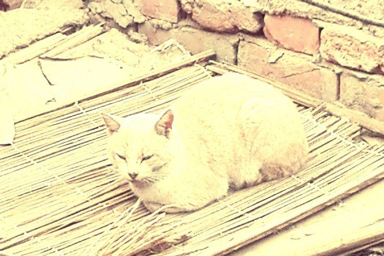 Cat Domestic Cat Feline Pets High Angle View Mammal Animal Themes Domestic Animals