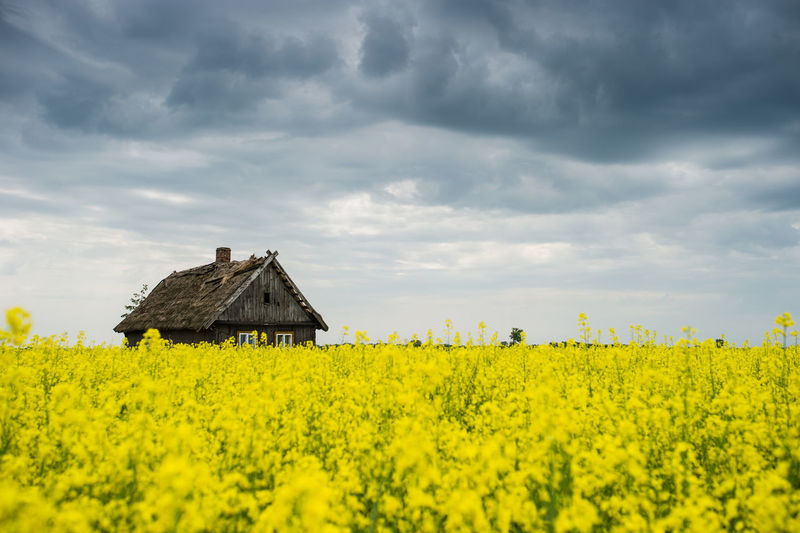 View of oilseed rape field against cloudy sky