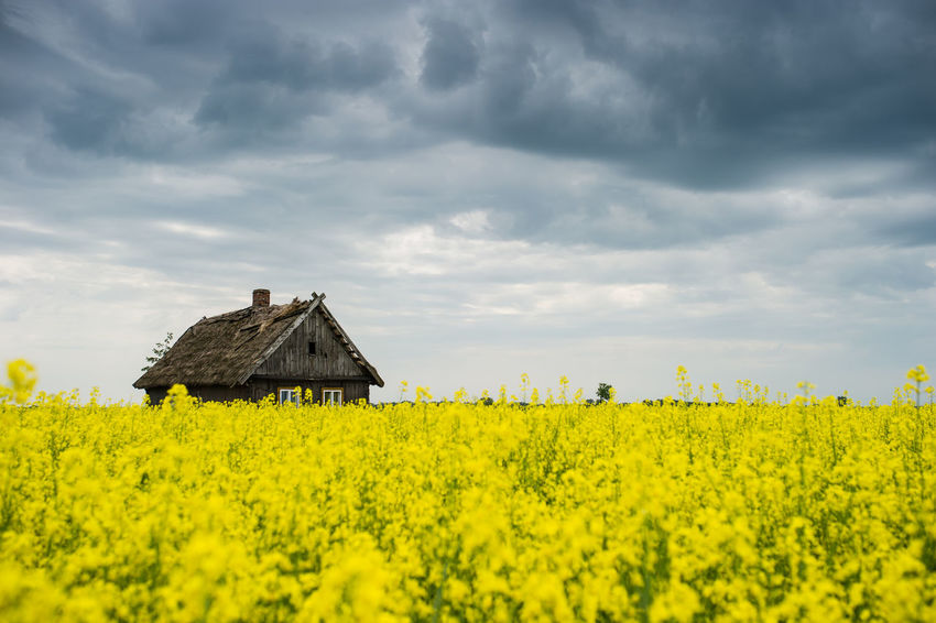 Life Agriculture Architecture Beauty In Nature Cloud - Sky Day Field Flower Landscape Nature No People Outdoors Plant Sky Village Yellow
