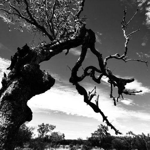 Ularu & Kata Tjuta National Park Black & White Blackandwhite Ularu Tree Nature Low Angle View No People