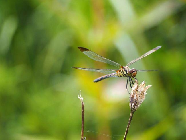 秋風に揺られて… トンボ Dragonfly Insect Taking Photo さんぽ Nature Beauty In Nature Autumn EyeEm Nature Lover EyeEm Gallery EyeEm Best Shots