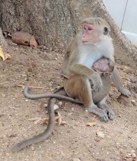 Maternidad Animal Themes Animal Photography Animal_collection Monkey Family Monkey Baby  ANIMAL EYEEM