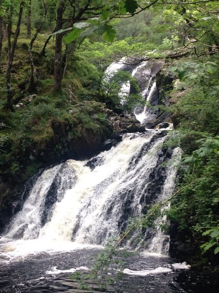 Waterfalls Water Wales UK Trees Frothing Water Foaming Water Running Water Green Color Nature Dolgellau Beauty In Nature Idyllic No People Taking Photos Enjoying Life Outdoors Travel Destinations