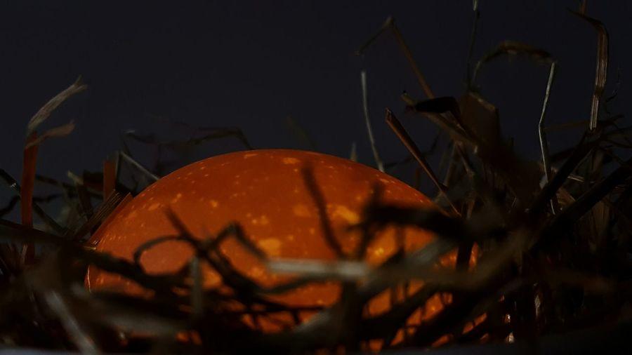 Egg Light Chicken Nest Eier Huhn Küken  Animal Brood