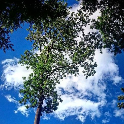 Depth. Nature Naturlovers Clouds Cloudlovers sky skylovers cloudlovers tree forest blue bluesky green outdoors skypainters