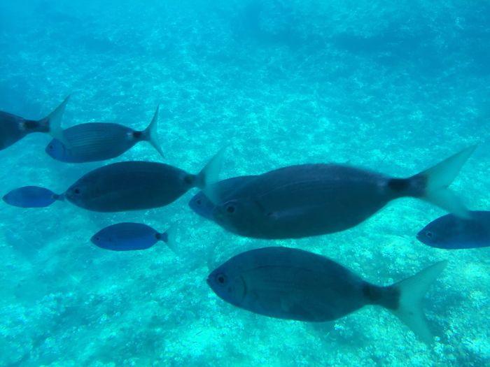 Under The Sea Fish Glass Bottom Boat Benidorm Island