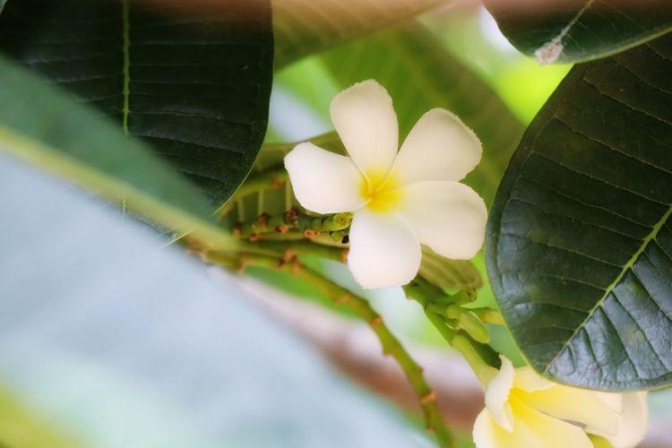 Flower Head Flower Leaf Petal Close-up Animal Themes Plant