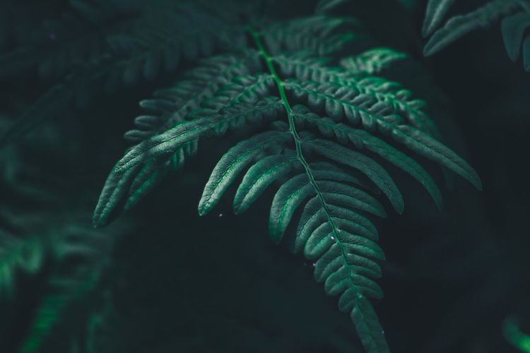 Travel Traveling Bali Bali, Indonesia Thailand Summer Nature Outdoors Growth Green Color Leaf Plant Part Close-up Plant Beauty In Nature Fern Focus On Foreground No People Selective Focus Day Tree Freshness Tranquility Natural Pattern Green Coniferous Tree Leaves