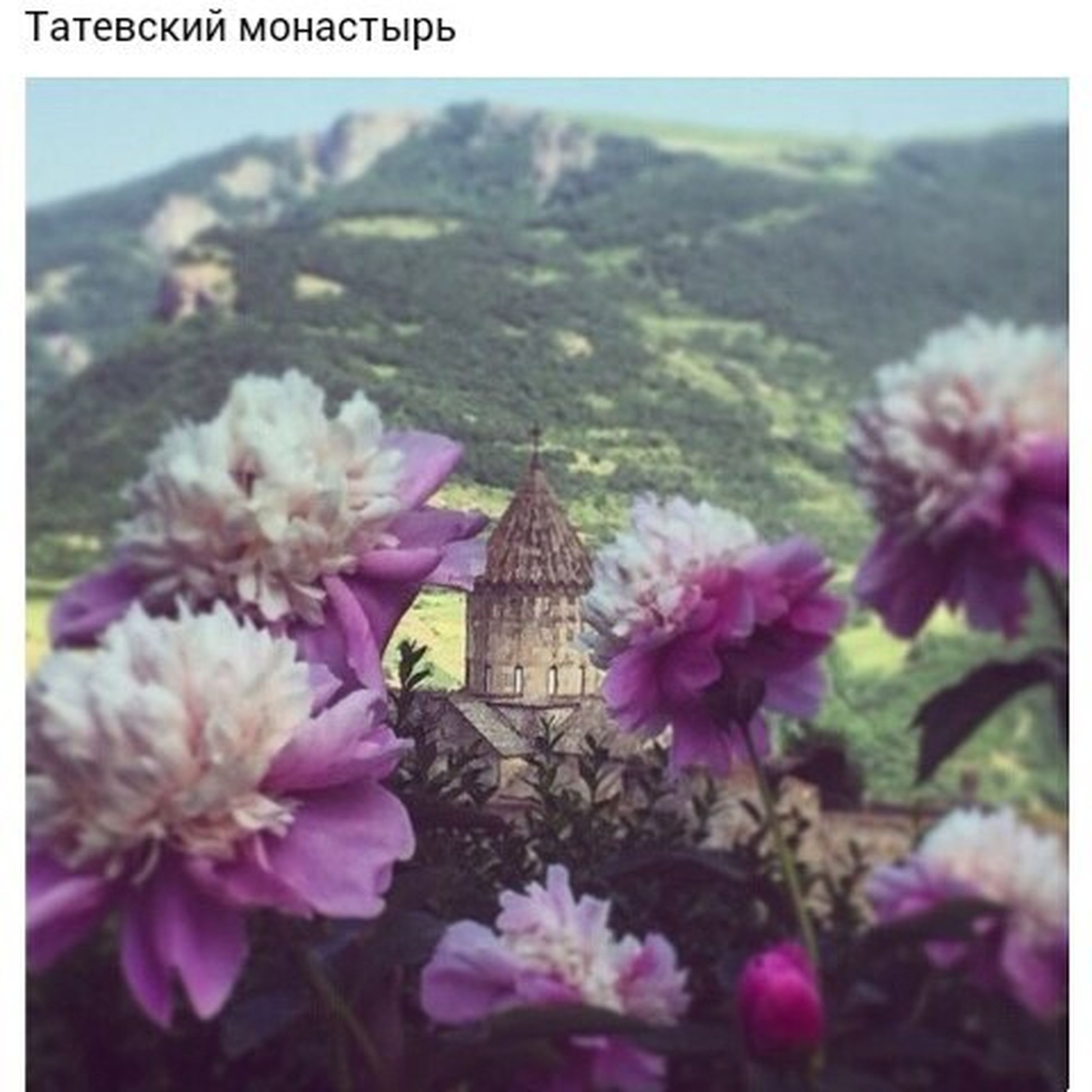 transfer print, flower, auto post production filter, freshness, fragility, focus on foreground, growth, petal, selective focus, beauty in nature, pink color, close-up, nature, plant, blooming, flower head, day, outdoors, in bloom, blossom