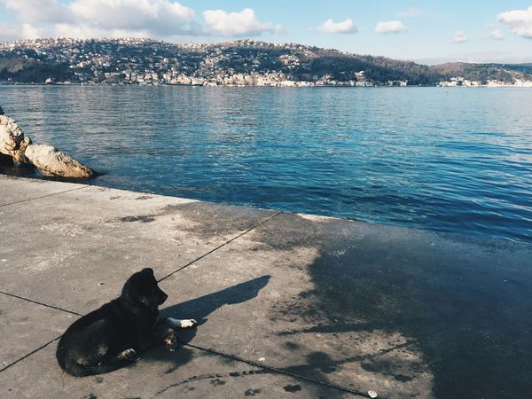 Loenly stray dog sitting on the shore with the view at the Bosphorus in Istanbul, Turkey Asphalt Beautiful Blue Bosphorus Bosphorus, Istanbul Day Dog Istanbul Lonely Dog Nature Outdoors Puppy Quiet Dog Sea Shore Turkey Villa Villas On The Water Water Winter