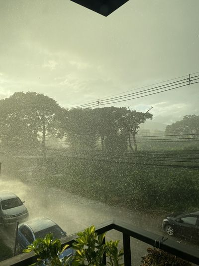 View of trees on road against sky during rainy season
