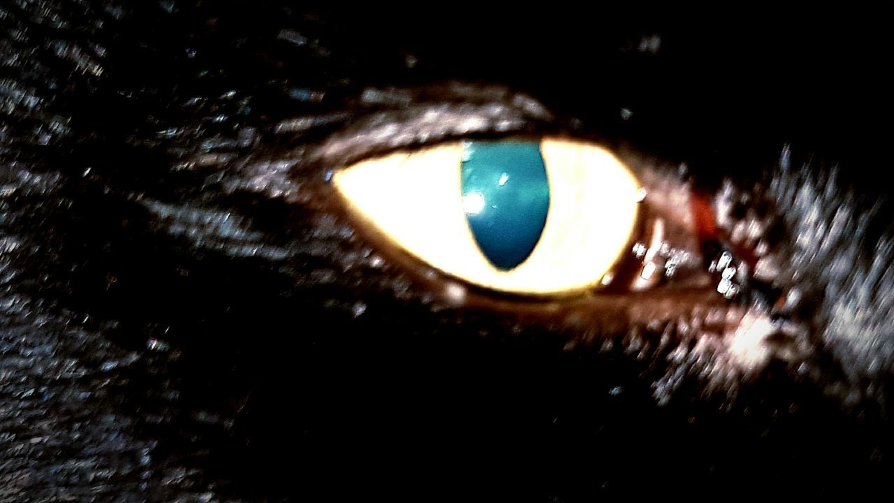 eyesight, human eye, eyelash, eyeball, sensory perception, close-up, iris - eye, looking at camera, real people, human body part, portrait, outdoors, one person, animal themes, day