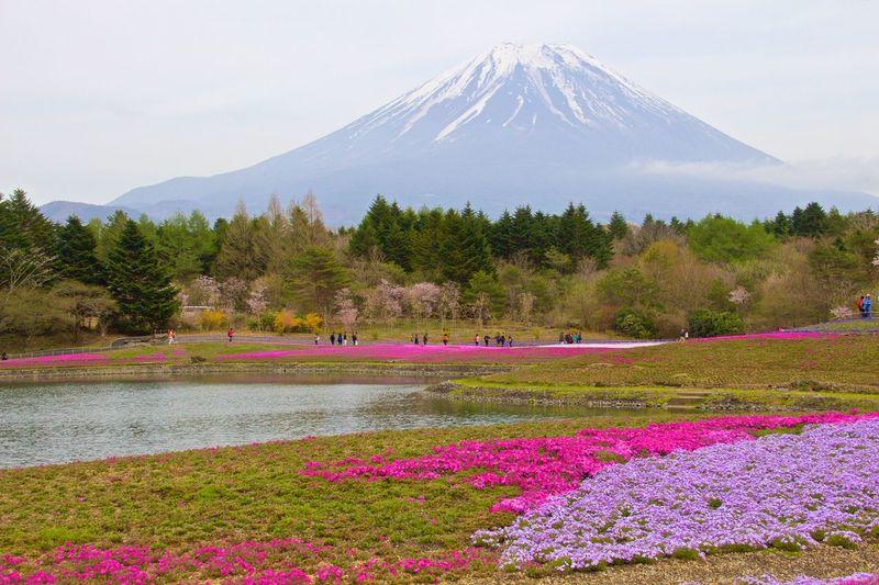 Mt. Fuji Mt