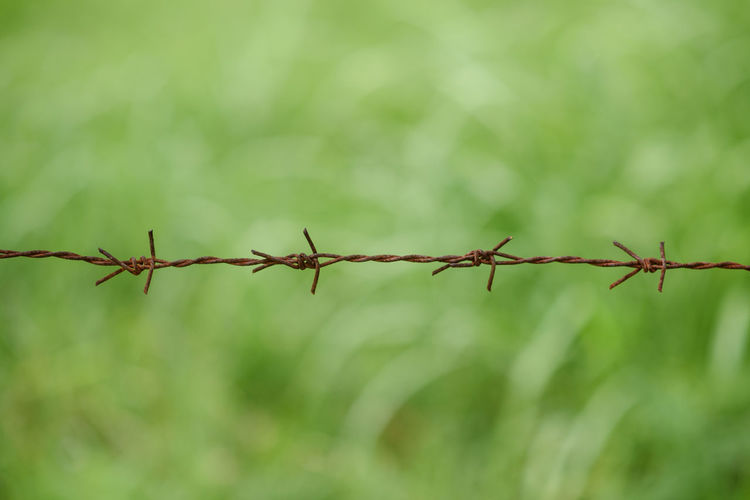 Barbed Wire Barrier Boundary Close-up Day Fence Focus On Foreground Metal Nature No People Outdoors Protection Safety Security Selective Focus Sharp Twisted Wire