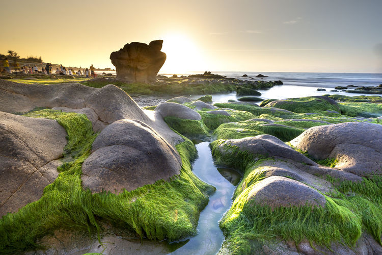 ASIA Beauty In Nature Beach Bizarre Coastline Fish Green Color Horizontal Landscape Scenery Morning Moss Nature No People Outdoors Pacific Ocean Photography Rock Object Sand Sea Seascape Sky Summer Sunset Textured  Tranquility Travel Vietnam Water Scenics - Nature Tranquil Scene Plant Land