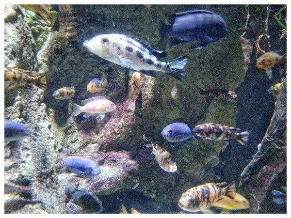 Fish Aquarium Acquario Di Genova Through The Window Sea Life Animal Themes Underwater Swimming Water Multi Colored No People UnderSea Aquarium Life Aquarium Photography Fish Tank Note 2 Smartphone Photography