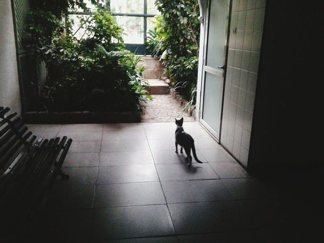 Discovery Cats 🐱 Lorenzo