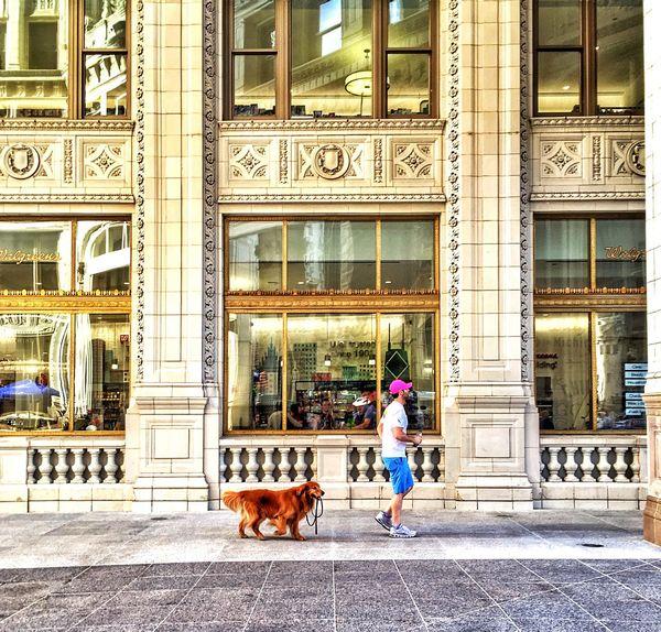 Wrigleybuilding Chicago Architecture Landmark Beautiful Mans Best Friend♡ Enjoying The Sights Afterwork IPhone Iphonephotography Amateurphotography Pictureoftheday Picoftheday Eyemphotography EyeEm Best Shots Eyeemphotography Eyeemurbanshot Eyeemurban