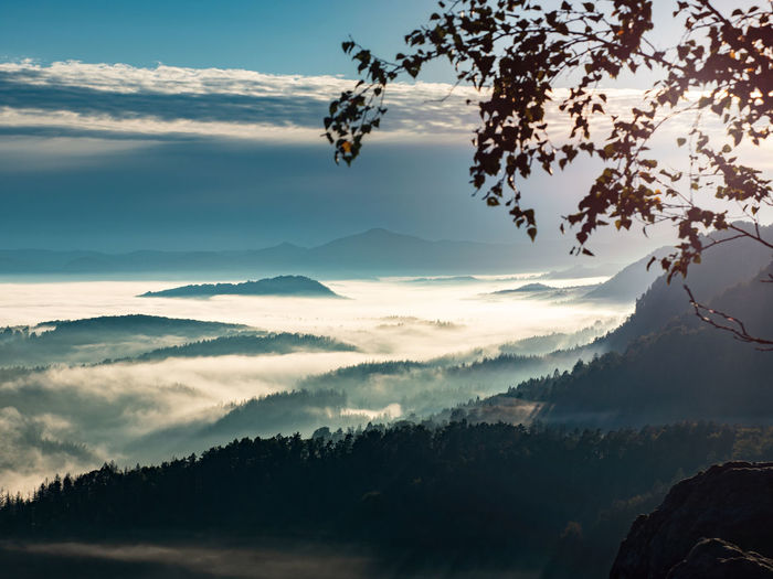 Morning september landscape with fir forest and mist in valley. aerial view, misty autumn season