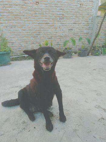 😃. Xiaomiphotograph Finished Today Xiaomiphotographyindonesia Animal Dog Doggy