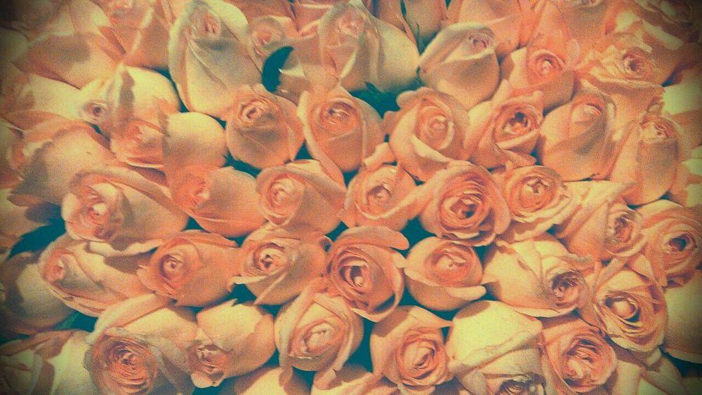 No People Large Group Of Objects Close-up Fragility Pink Roses Rose - Flower Rosa Flowers Still Vintage Flowers,Plants & Garden Pink Flower Petal Flower Collection Jour Fleurs