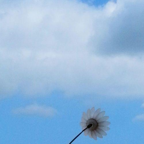 Les fleurs solaires aussi rêvent de ciel. Hello World