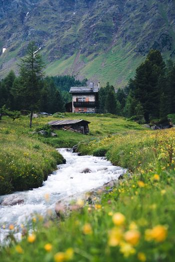 Swiss mountain life Switzerland Plant Growth Tree Nature Beauty In Nature Architecture Built Structure Green Color Water No People Field Day Building Exterior Scenics - Nature Land Building House Flower Landscape Outdoors