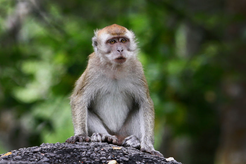 Close up of Monkey Animal Themes Animal Wildlife Animals In The Wild Macaca Mammal Monkey Nature No People One Animal Outdoors Primate