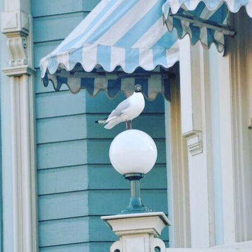 Nos amis les oiseaux, sur le parc :D Disneyland Birds Nikon5300