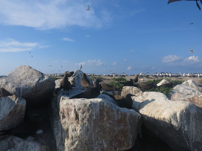 Panoramic view of rocks against blue sky