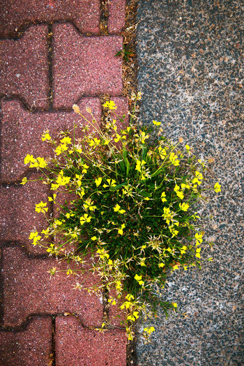 Architecture Brick Close-up Concrete Day Floor Flower Flowering Plant Fragility Freshness Gap Growth High Angle View Leaf Nature No People Outdoors Plant Plant Part Survival Vulnerability  Wall - Building Feature Yellow