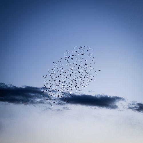 Flying bird up