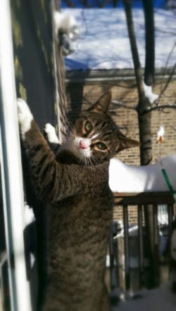 Look What I Can Do! Silly Cat  My Cats Having Fun Spidercat Cute Pets