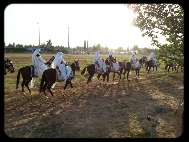 مهرجان الفروسية /طرابلس 2013