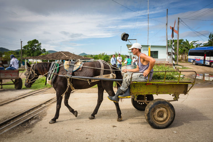 Off To Work Cuba Cuba Collection EyeEmNewHere Farm Life Man Canon Canonphotography Carribean Cart Day Domestic Domestic Animals Horse Horse And Cart Lifestyles Livestock Mammal Mode Of Transportation One Person Outdoors People Real People Streetphotography Transportation Working Animal