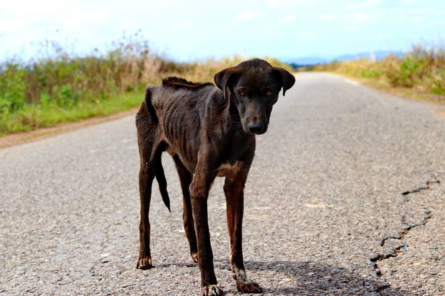Lost Lost In The Landscape Stray Dog Animal Themes Black Labrador Day Dog Domestic Animals Help Helpme Homeless Labrador Retriever Looking Lostplaces Mammal No People One Animal Outdoors Pets Pitiable Road Sadness Sky Starve Stray