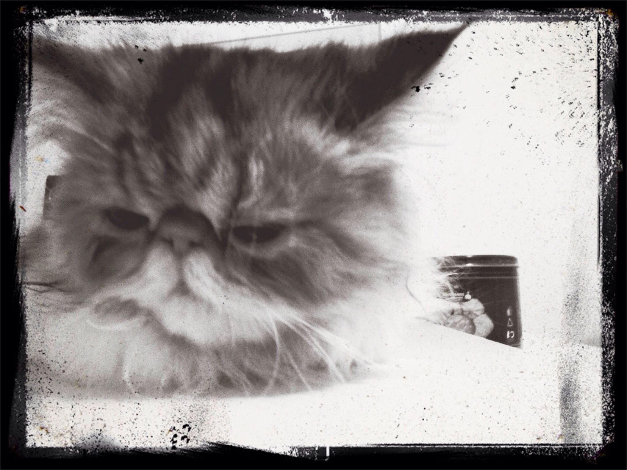 transfer print, animal themes, one animal, auto post production filter, domestic animals, pets, domestic cat, mammal, cat, feline, relaxation, close-up, indoors, whisker, animal hair, animal head, sleeping, sitting, full length, looking away