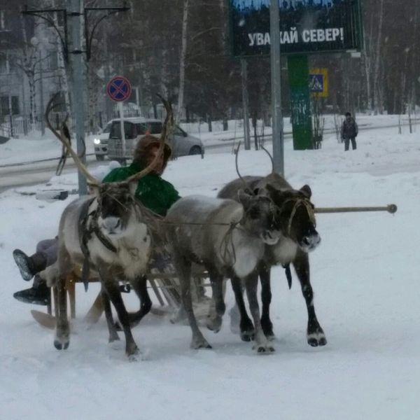 My Town North Siberia Deer мойгород сибирь олень олени север