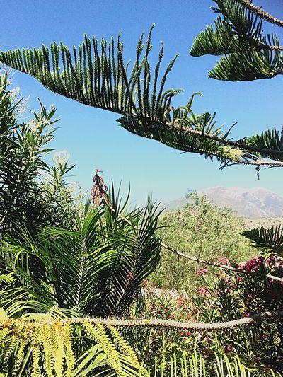 Maroma Mountain Leave Framed Green Blue Sky Summer