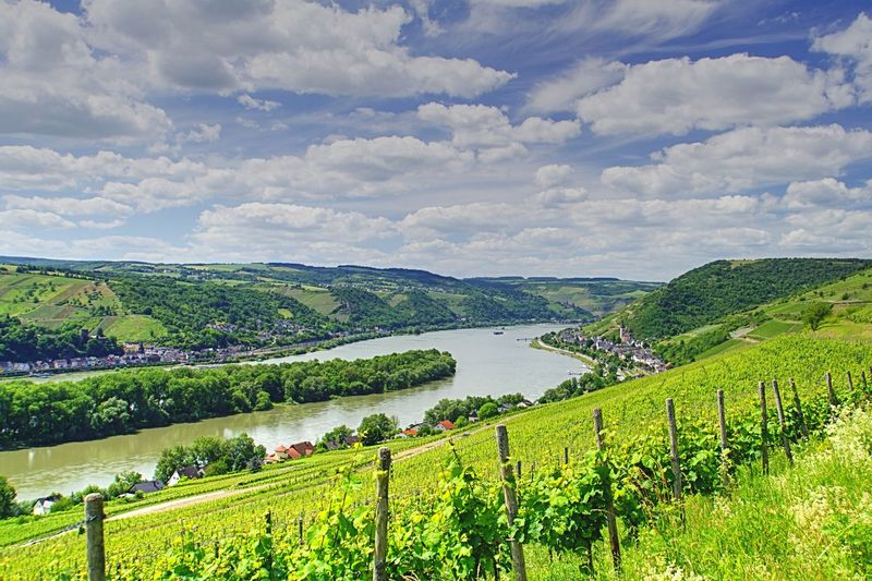 Agriculture Vineyard Field Landscape Scenics Cloud - Sky Rural Scene Nature Green Color Sky Hill Rhein Rheinsteig Germany Outdoors Wine High Angle View Growth Tranquil Scene Grape Tree Tranquility Wine Not