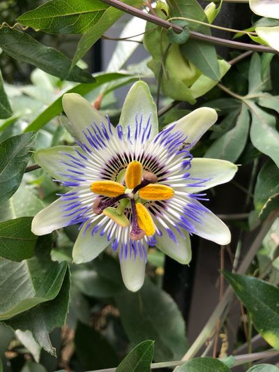 Flower Flowering Plant Plant Freshness Growth Flower Head Inflorescence