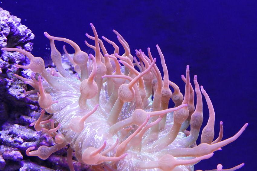Diving Grass Nature SCUBA Scuba Diving Snorkeling Under Water Animal Background Backgrounds Blue Water Colorful Colorfull Coral Coral Coral Colored Fish Ocean River Sea Snorkel Swim Swming Tropical Wallpaper Water