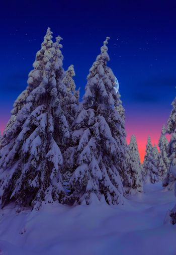 Snow covered trees against blue sky