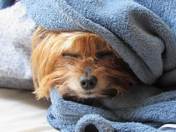 Dog burrito Pet