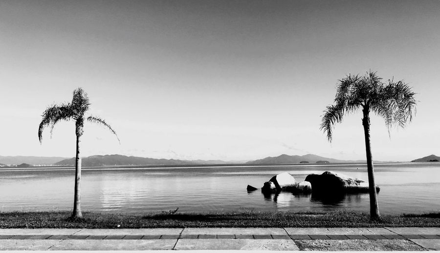Palm Tree Water Tree Nature Beauty In Nature Tranquil Scene Tranquility Outdoors Relaxation Scenics Sky Sea Clear Sky Day