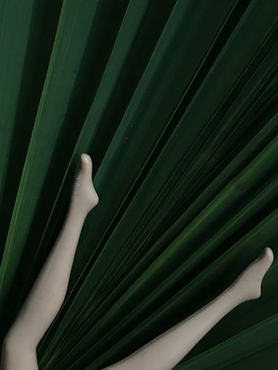 Close-up of woman hand on leaf