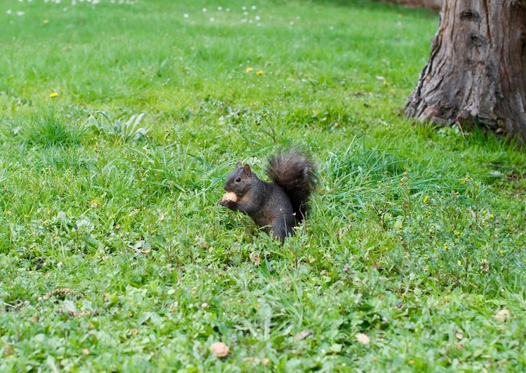 Squirrel at the