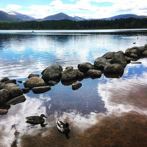Reflections Scotland Highlands Summer Holiday Nature Ducks Cairngorm Hanging Out Taking Photos Holiday Photography