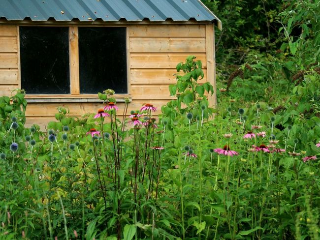 Garden shed Shed Sheds Shed Roof Garden Shed Flower Building Exterior Wood - Material Built Structure Outdoors Plant Architecture Nature No People Rural Scene Day Summer Kenmare, Ireland